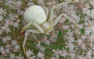 О чем говорит примета про паука в машине — стоит ли опасаться