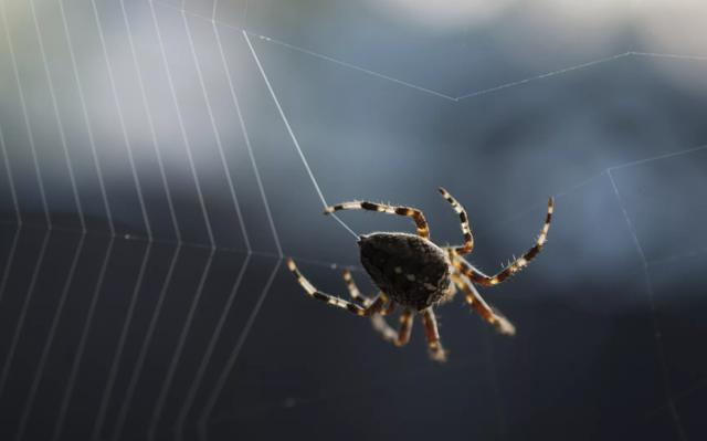 О чем говорит примета про паука в машине - стоит ли опасаться